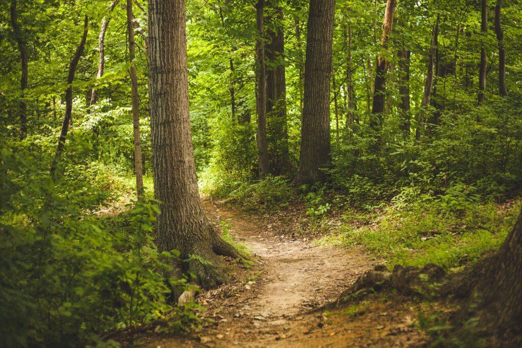 At finde vej